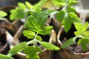 К огородному сезону готовлюсь в конце зимы. Баклажаны, ранние сорта перца и другие культуры, которые начинаю выращивать в феврале