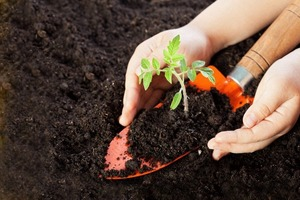 Подготавливаем почву для помидоров: из чего приготовить смесь для посева семян и пикировки рассады