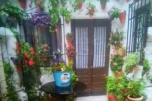 Повесила во дворе занавеску для душа. Теперь мой маленький сад кажется больше (фото)