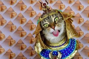 Как кошка стала музой для создания единственной книги в мире, рассказавшей историю человечества через призму домашнего питомца