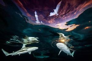 Акулы, затонувшие корабли и озеро, полное медуз: красивые фото победителей подводного конкурса