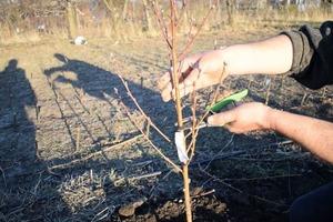 Итальянские саженцы в России: почему увеличится доля зарубежных растений и как не ошибиться с выбором