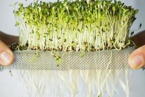 Как зарабатывать 80-120 тысяч в месяц: строим прибыльный бизнес на выращивании микрозелени