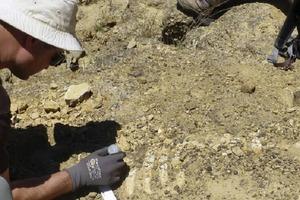 В Мексике нашли «крылатую» акулу, которая жила 93 млн лет назад