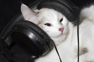 Японские ученые обнаружили способность кошек отличать голоса хозяев от голосов незнакомцев