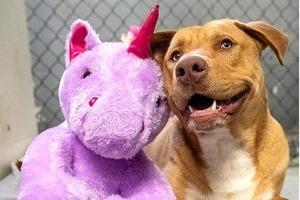 Бездомный пес несколько раз пытался стащить фиолетового единорога: люди приютили собаку и подарили любимую игрушку