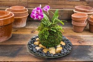 Цветочные композиции с орхидеями: для тех, кто хочет освежить интерьер своего дома