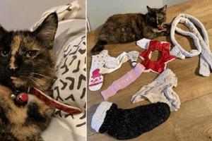 Непослушная кошка не перестает воровать вещи у соседей и приносить их домой
