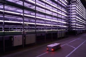 Вертикальная ферма будущего открылась на складе без окон в Копенгагене: за счет нее планируется производить 1000 тонн продукции в год