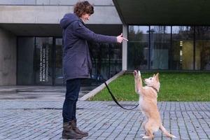 Методы дрессировки, основанные на наказании, приводят к стрессу у собак: результаты исследований