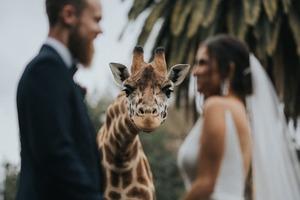 Самые яркие и необычные фото со свадеб 2020 года, которые были удостоены наград