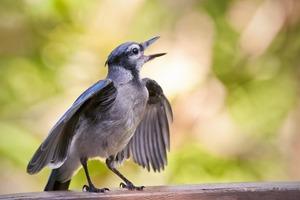 Ученые из Калифорнийского политехнического университета пришли к выводу, что пение птиц может значительно улучшить самочувствие человека и с