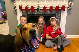Собака по кличке Пенни случайно стала главной героиней рождественских семейных фотографий