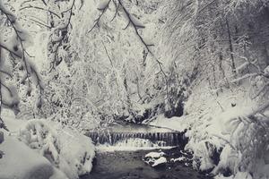 Фотограф Ольга Баландюх запечатлела невероятную красоту зимних Карпат: 10 фото