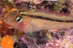 Изменение климата может увеличить некоторые популяции рыб, чему будет способствовать высокий уровень CO₂ в океанах