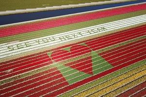 Голландские тюльпановые фермы оставили в поле послание надежды из ярких цветов