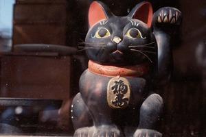 На что нужно обратить внимание при выборе кота удачи - манэки-нэко, чтобы не привлечь несчастье (важны и цвет, и какая лапка поднята)