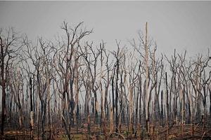 Леса Амазонки могут высохнуть и превратиться в засушливую кустарниковую равнину к 2064 году из-за изменения климата и вырубки лесов