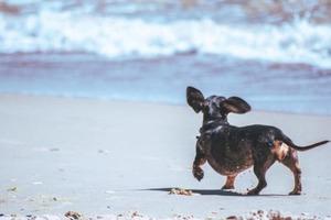 Без животных - с 1 января действуют новые правила пользования пляжами