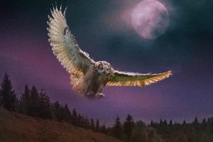Полет на восток был хорошим предзнаменованием, а на запад предвещал беду: гадания древних жрецов по птицам