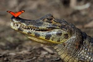 Исследования объясняют, почему крокодилы так мало изменились со времен динозавров