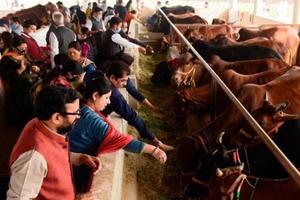 """Живое наследие человечества: в Индии ввели общенациональный экзамен по """"науке о коровах"""""""