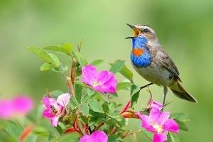 Новое исследование показало, что люди, живущие вблизи природных зон с разнообразными птицами, намного счастливее