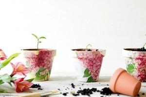 Декупаж цветочных горшков своими руками: растения и интерьер с таким декором в момент преобразятся и порадуют глаз