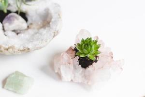 Идея для эффектного украшения своего пространства: пересаживаем суккуленты в самодельные кристальные горшки