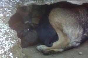 Люди были уверены, что собака тужит по хозяину, пока не согнали ее с места