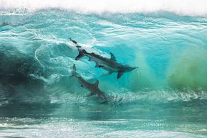 Фотограф хотел просто сделать снимки китовых акул, отдыхая в Австралии, но его камера зафиксировала невероятное явление