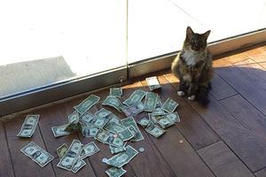 """""""Был бы у меня такой кот, я, может, и не женился бы никогда"""": сотрудники фирмы выяснили, откуда их кот таскает наличку"""