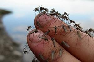 """3 причины: почему комары """"любят"""" одних людей больше, чем других"""