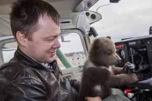 Лохматое счастье: российский летчик приютил в 2016 году медвежонка, который вырос и стал уже совсем большим (фото)