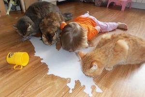 Почему не стоит оставлять детей наедине с домашними животными: смешные фото