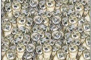 Найдите кота среди сов: для развития чувства юмора и внимательности