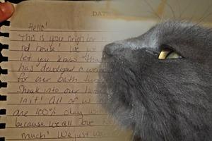 Женщина не знала, куда каждый день пропадает ее кот, пока однажды не заметила записку в его ошейнике