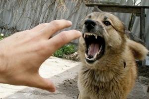 Что делать, если на вас напала собака: простые методики защиты