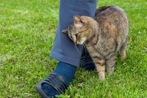 Не стоит брать на руки кота, трущегося о ногу: причины странного поведения кота