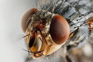 Как избавиться от комаров и мух: неожиданно простой, но эффективный способ