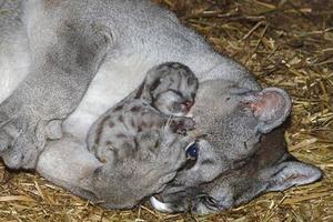 Подборка теплых и милых фотографий, доказывающих, что животные тоже умеют любить