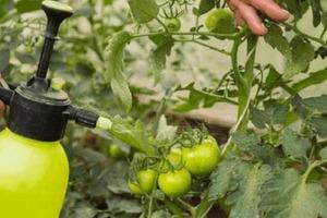 Одна капля йода может преобразить огород: как использовать средство эффективно