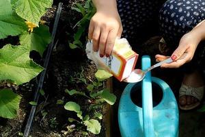 Поливаю только водой с содой. Урожай отменный, а вредителей нет