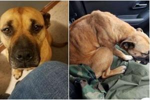 Отчаянная бездомная собака увидела открытую дверь и села в машину: этот смелый жест изменил ее жизнь