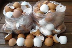 Весь год собираю скорлупу от яиц, а потом кладу ее в духовку