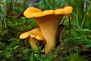 Бывалый грибник рассказал, как быстро находить грибы. Жаль, что раньше этого не знала