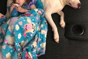 Родители разрешили питбулю ночевать в комнате маленькой дочки. Однажды ночью они увидели, что пес спит в кроватке