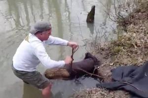 Мужчина думал, что спас из беды бобра, но увидел, что это было другое животное