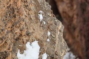 На снимке, сделанном в горах, затаился снежный барс. Сможете ли вы его найти?