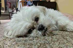 Родители отправились в отпуск и попросили сына позаботиться о собаке. Подросток отправил им веселый видео отчет